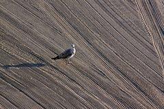 孤独的海鸥由在地中海的拖拉机沙子清洗了 免版税库存照片