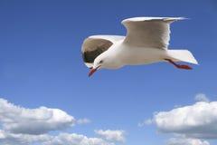 孤独的海鸥 免版税图库摄影