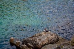 孤独的渔夫,杜布罗夫尼克, Coratia 图库摄影
