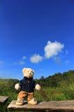 孤独的熊 免版税库存照片