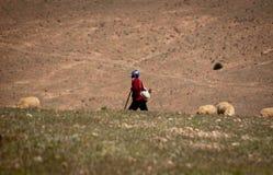 孤独的牧羊人和他的群在摩洛哥阿特拉斯山脉 免版税库存图片