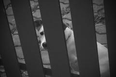孤独的狗在房子里被关进笼子 免版税库存图片