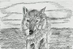 孤独的狼-狼疮-铅笔图 免版税库存图片
