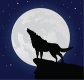 孤独的狼 免版税库存照片