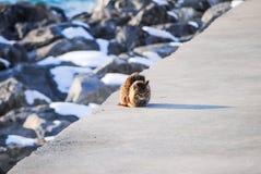 孤独的猫等待渔夫 库存照片