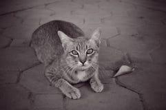 孤独的猫 免版税库存照片