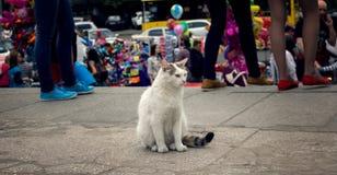 孤独的猫 免版税库存图片