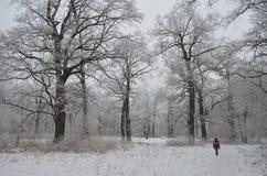 孤独的男孩在冬天森林里 图库摄影