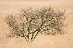 孤独的草看见结构树 免版税库存图片