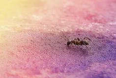 孤独的蚂蚁坐被湿润的表面 免版税库存图片