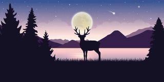 孤独的野生生物驯鹿在自然美丽的湖在与满月和满天星斗的天空神秘的风景的晚上 皇族释放例证