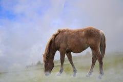 孤独的马在有雾的草甸 免版税库存照片
