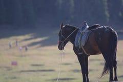 孤独的马 免版税库存照片
