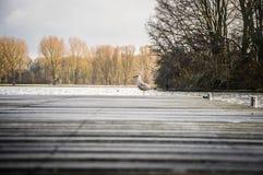 孤独的鸟 图库摄影