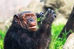孤独的猴子在热带森林里 图库摄影