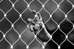 孤独的猴子 图库摄影