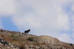 孤独的驴 免版税库存图片