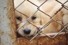 孤独笼子的狗 免版税库存图片