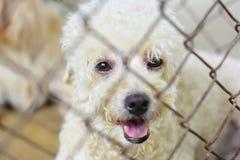 孤独笼子的狗 免版税库存照片