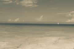 孤立单桅三角帆船桑给巴尔 免版税库存图片
