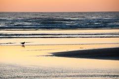 孤立古伦在日落的海滩在大炮海滩俄勒冈 免版税库存照片