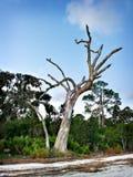 孤立岸结构树 免版税库存照片