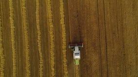 孤立收割机慢慢地收获成熟麦子五谷  股票视频