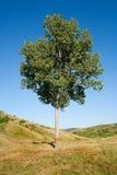 孤立日落结构树 免版税图库摄影