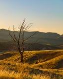 孤立日落结构树 库存照片