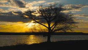 孤立树剪影没有叶子的临近湖 在日落飞行的云彩在湖 秋天横向 股票视频