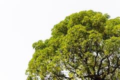 孤立树在亚洲。 库存图片