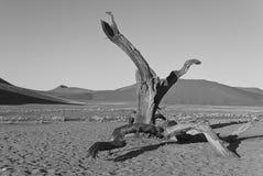 孤立树在纳米比亚沙漠 免版税库存照片