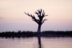 孤立树在Amarapura,曼德勒分部,缅甸 库存照片