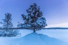 孤立树在Jukkasjarvi,瑞典 免版税库存照片