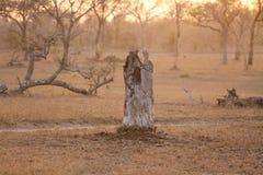 孤立树桩 免版税库存图片