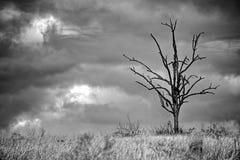 孤立树现出轮廓反对黑暗和风雨如磐的天空 免版税图库摄影