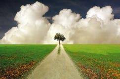 孤立树风景 免版税图库摄影