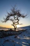 孤立树-冬天 库存图片