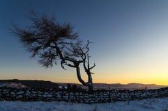 孤立树-冬天 免版税库存图片