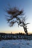 孤立树-冬天 免版税库存照片