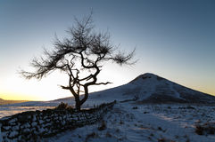 孤立树-冬天 库存照片