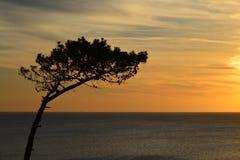 孤立树 免版税库存图片