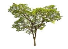孤立树 免版税图库摄影