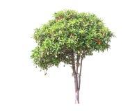 孤立树 库存照片