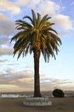孤立棕榈树 库存图片