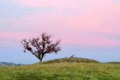 孤立橡树日落 免版税图库摄影