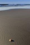 孤立海壳 免版税库存照片