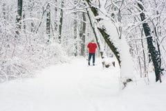 孤立滑雪者在森林 库存图片