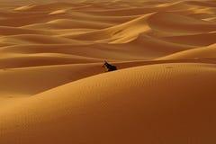 孤立狗在尔格沙漠在摩洛哥 免版税图库摄影