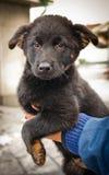 孤立的小狗以一犬拘留所 库存图片